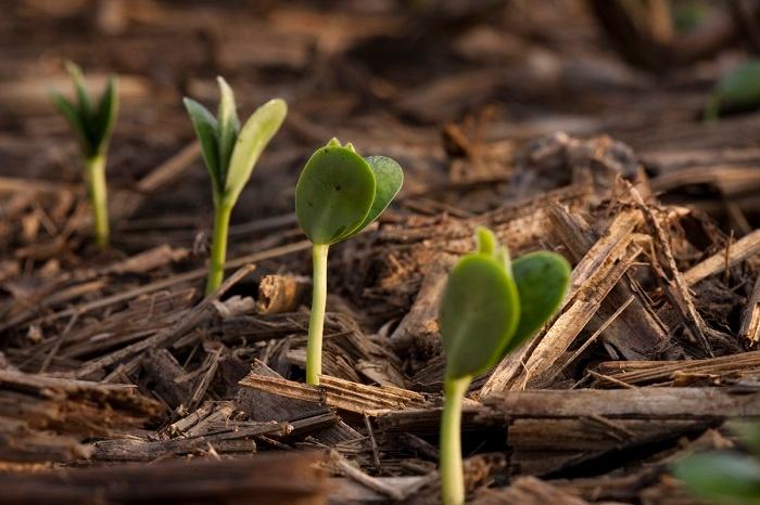 growth_SML.jpg
